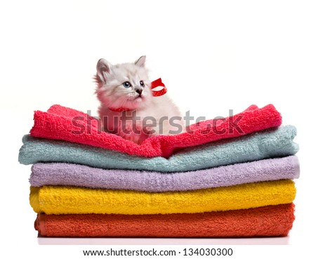 funny grey kitten with ribbon siting on stack of colorful towel isolated on white - stock photo