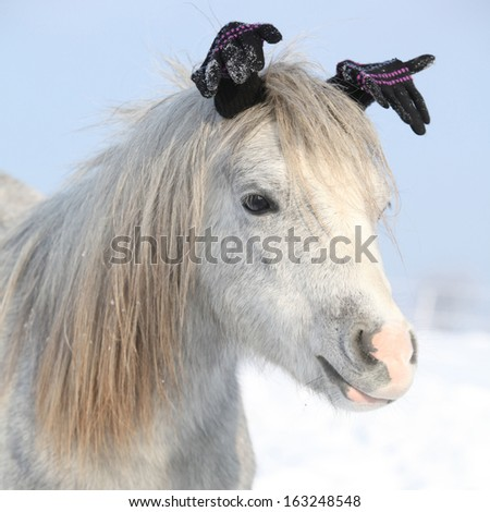 Funny grey pony with glowes in sunny winter - stock photo