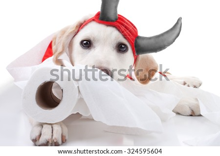 Funny guilty Labrador retriever puppy dog in halloween devil costume makes mess with toilet paper - stock photo