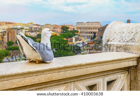 Funny gull sits on a parapet of the Altar of the Fatherland on the background ( blurred ) of the Great Roman Colosseum (Coliseum, Colosseo) and the Roman Forum in sunset time. Rome. Italy. Europe. - stock photo