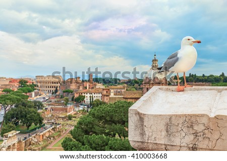 Funny gull sits on a parapet of the Altar of the Fatherland on the background ( blurred ) of the  Roman Colosseum, church of Santi Luca e Martina and the Roman Forum in the evening.Rome.Italy.Europe. - stock photo