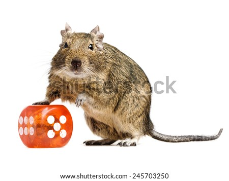 funny hamster standing with big dice cube full-length closeup on white background - stock photo