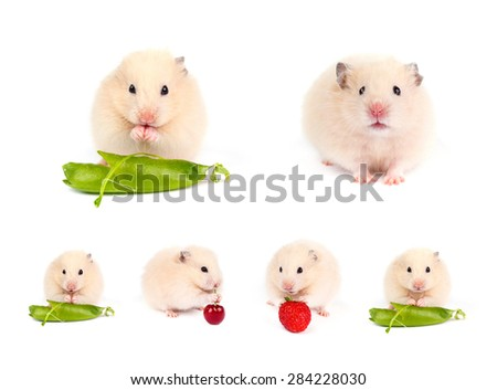 Funny hamsters. Set. - stock photo