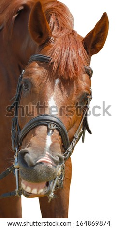 funny horse look at camera and smiling on white background - stock photo