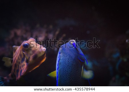 Funny humpback turretfish also known as helmet cowfish deep underwater.  - stock photo