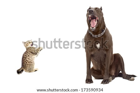 Funny image. Kitten was scared big dog. Isolated on white background. - stock photo