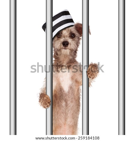 Funny image of a bad dog wearing a prisoner hat in jail holding onto the prison bars - stock photo
