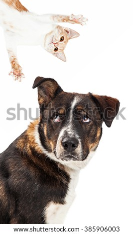Funny image of a large dog with an irritated expression looking up at a playful kitten coming out of the corner