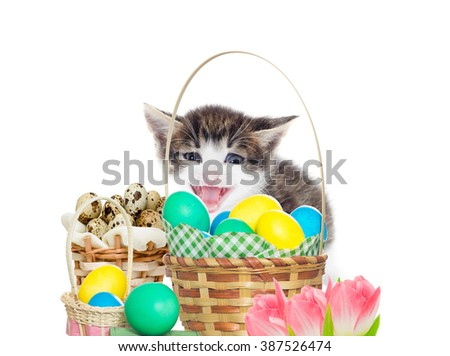 Funny kitten and  Easter set - stock photo
