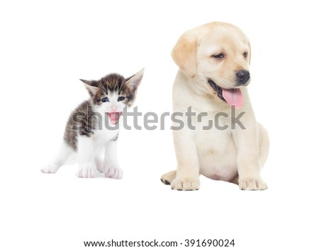 funny kitten and labrador puppy