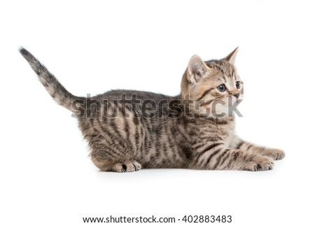 funny kitten cat ready to jump isolated
