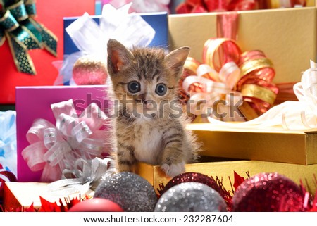 Funny kitten coming out of a gift box as a present - stock photo
