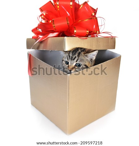 Funny kitten in  gift box with red ribbon