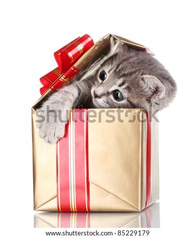 Funny kitten in golden gift box isolated on white - stock photo