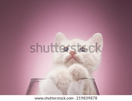 Funny kitten in studio on a pink background - stock photo