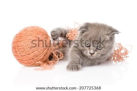 funny kitten playing with a ball of wool yarn. isolated on white background - stock photo