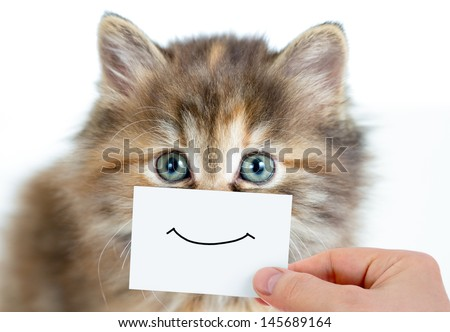Cat With Paper Cutout Over Its Eyes Funny