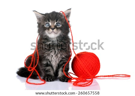 Funny kitten with a ball of yarn - stock photo