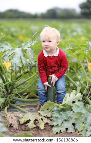 Funny little baby girl in colorful red sweater picks up green ripe zucchini standing in the middle of a vegetable field on farm