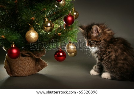funny little cat and christmas tree - stock photo