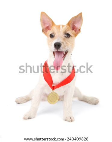 Funny little dog Jack Russell terrier with gold prize winning medal, isolated on white - stock photo