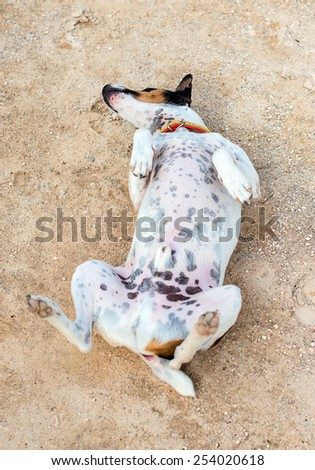 Funny little dog lying on the ground. - stock photo