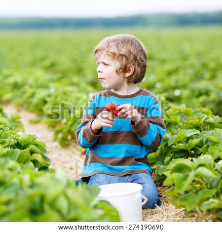 Funny little kid boy picking and eating strawberries on organic bio berry farm in summer, on warm sunny day. Harvest fields in Germany. - stock photo