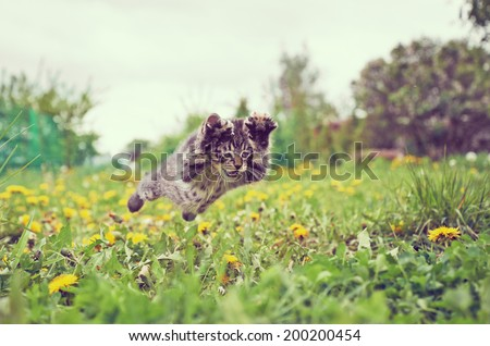 Funny little kitten is jumping on green meadow in summer - stock photo