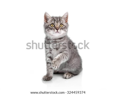 Funny little kitten looks up, isolated