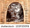 funny little kitten sitting inside wicker cat house - stock photo
