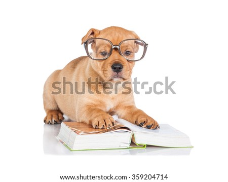 Funny little puppy with glasses and book