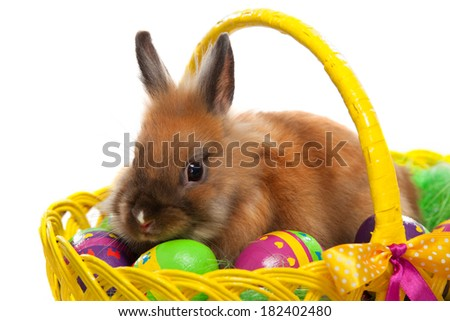 Funny little rabbit among Easter eggs in basket. Greeting card with bunny. Isolated on white background - stock photo