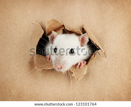 funny little rat on paper background - stock photo