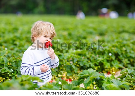 Funny little toddler kid boy picking and eating strawberries on organic pick a berry farm in summer, on warm sunny day. Harvest fields. Healthy food for children. Gardening and farming concept - stock photo