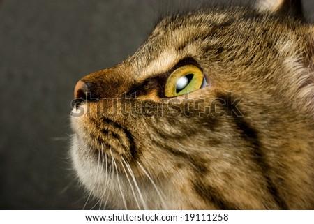 Funny looking cats face closeup - stock photo