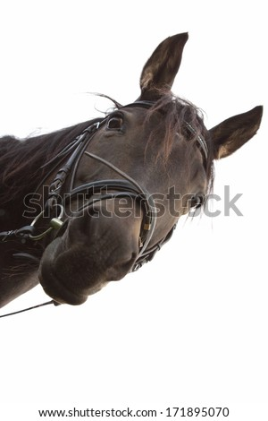 funny looking Mixed Breed Horse - stock photo