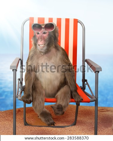 Funny monkey relaxing on a  beach chair - stock photo