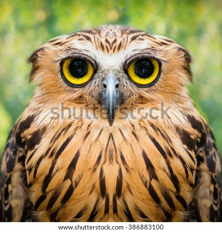 funny owl face close up with big eyes - stock photo