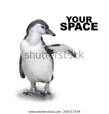 Funny penguin showing space for your text or picture.