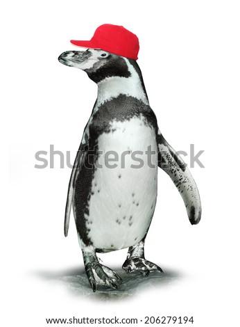 Funny penguin with baseball cap. - stock photo