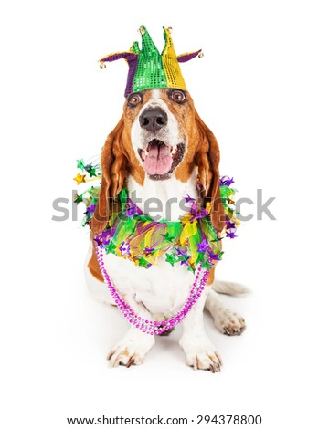 Funny photo of a happy and smiling Basset Hound dog wearing a jester hat, neck garland and bead necklace - stock photo