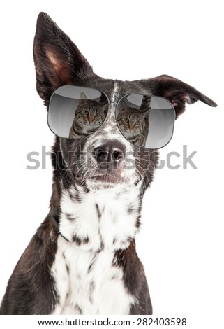 Funny photo of a large dog wearing sunglasses with a reflection of a cat in them - stock photo