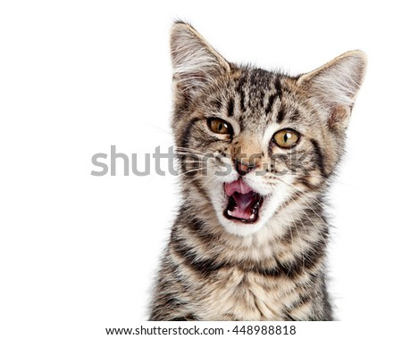 Funny photo of cute hungry kitten with mouth open wide