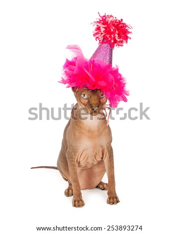 Funny picture of a hairless Sphinx breed cat wearing a fancy pink birthday party hat - stock photo