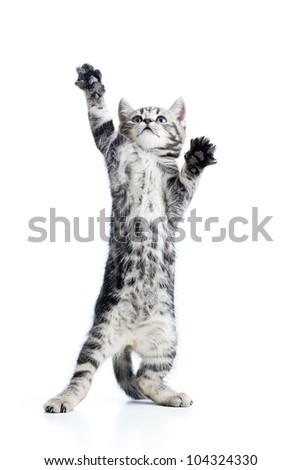 funny playful cat is standing - stock photo
