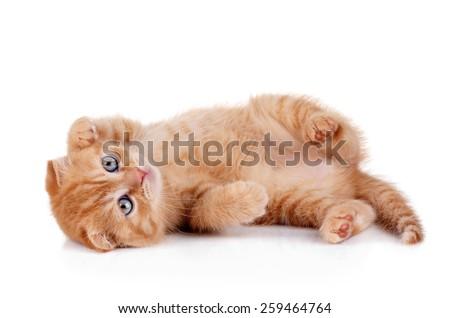 Funny playful kitten - stock photo