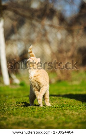 Funny playful red-haired cat on green grass - stock photo