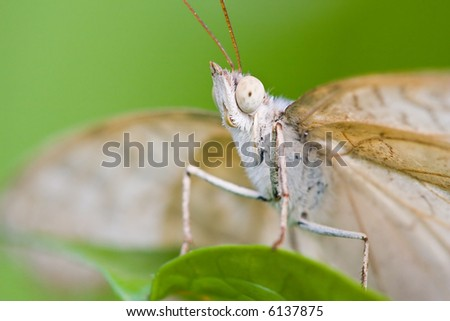 Funny portrait of a white butterfly