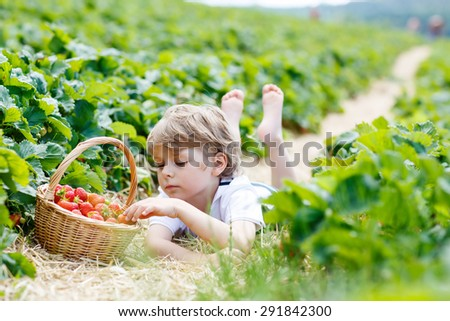 Funny preschool boy picking and eating strawberries on organic bio berry farm in summer, on warm sunny day. Harvest fields in Germany. Healthy food for children. - stock photo