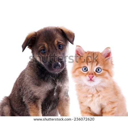 Funny puppy and little red kitten isolated on white - stock photo
